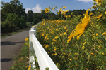 greenway summer flower pic